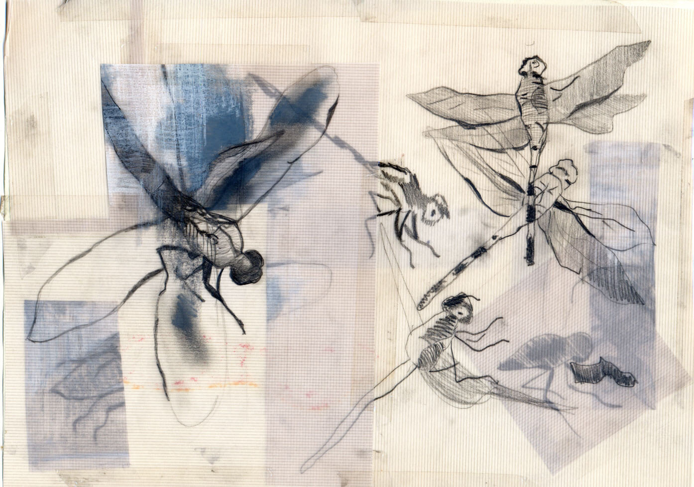 Lilliput, graphite on vellum paper, 21 x 29 cm., 2006.