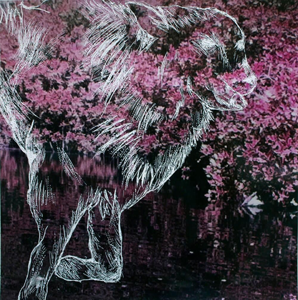 Animals, sgrafitto on digital print, 50 x 50cm., 2012.