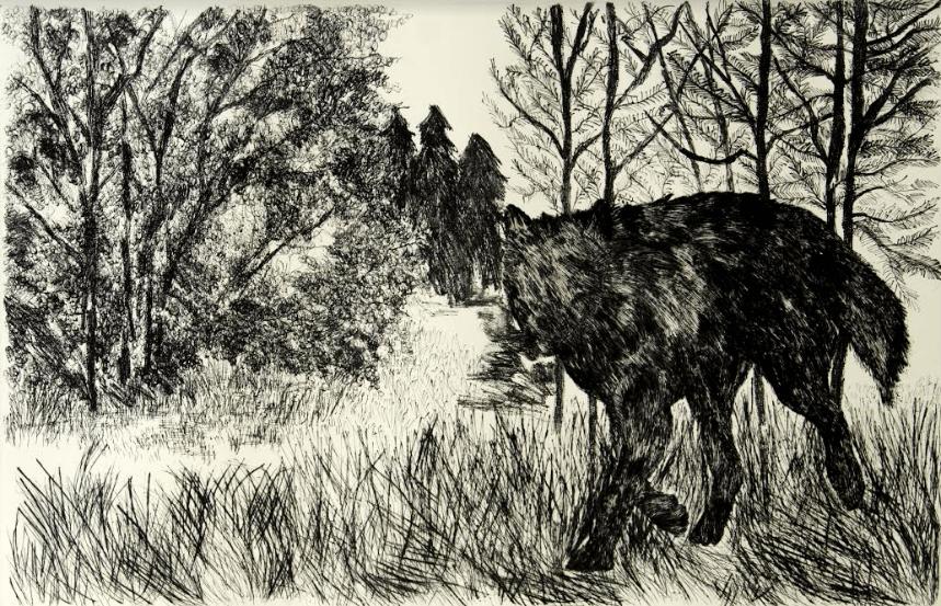 Animals, dry point on cotton paper, 55 x 84.5 cm., 2013.
